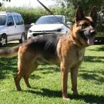 Lobo (12)