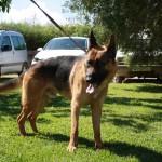 Lobo (14)