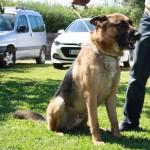 Lobo (19)