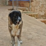 Tigre new (3)